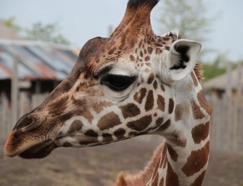 Dagje Wildlands Adventure Zoo Park Emmen