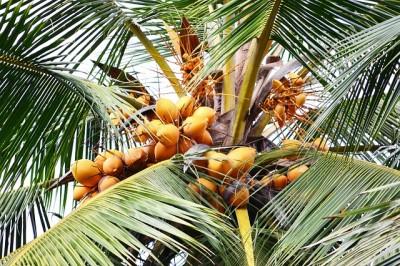 Kokosmakronen kokos recept lekker eten visite