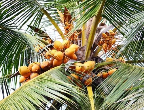Recept: heerlijke Kokosmakronen
