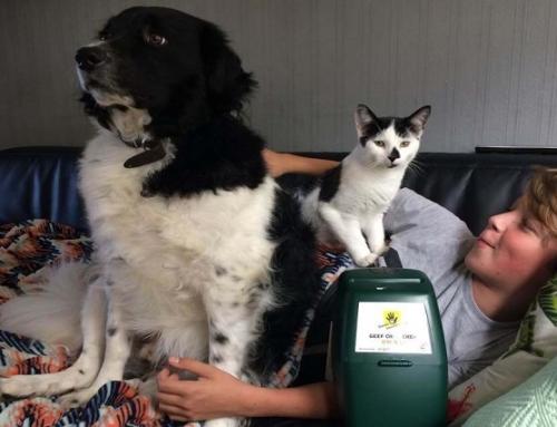Collecteren voor de dierenbescherming