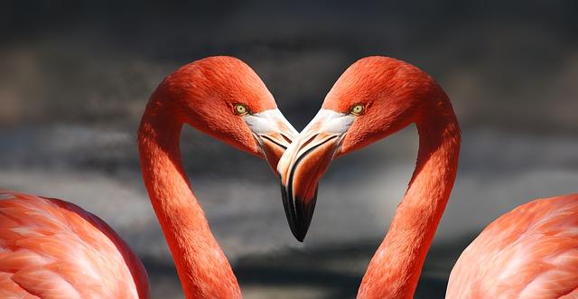 valentijn valentijnsdag flamingo