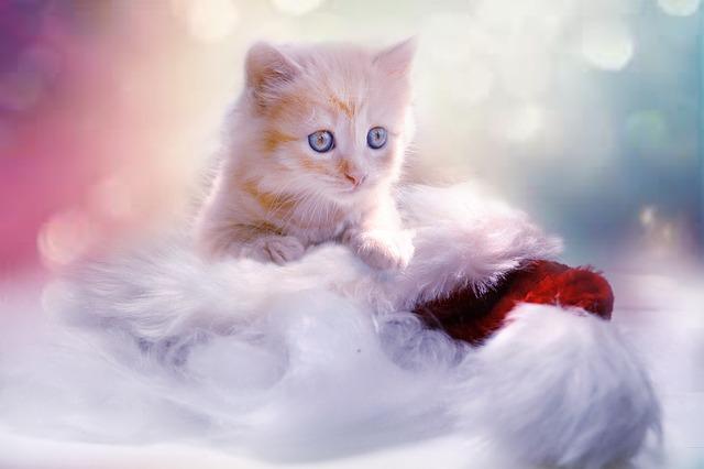 huisideren katje poes huisdier
