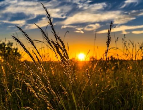 De zin van de zon: alle fabels en feiten op een rij