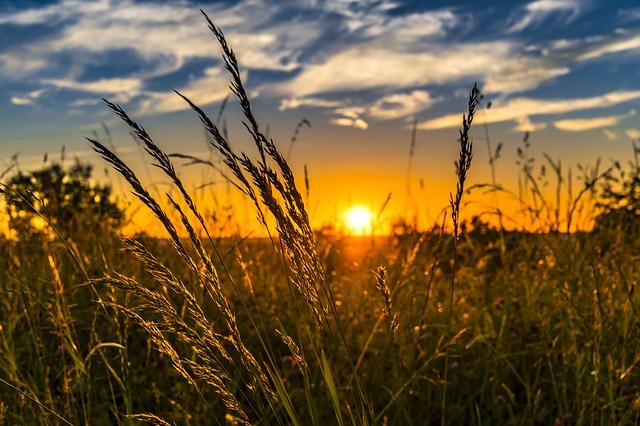 zon zonlicht natuur